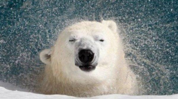 Николаевский зоопарк приглашает горожан отпраздновать день рождения белого медведя Нанука